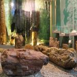 Exposition de troncs fossilisés au Musée de la forêt petrifiée de Lesbos