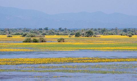 Le lac de Kerkini au printemps