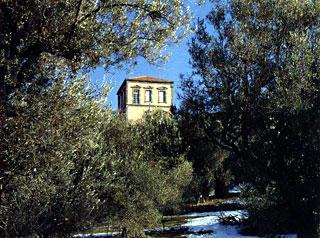 Paysage caractéristique de Lesbos avec demeure paysanne au milieu des oliveraies