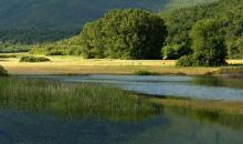 La forêt autour du lac de Kerkini