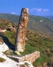 Tronc d'arbre fossilisé il y a environ 20 millions d'années