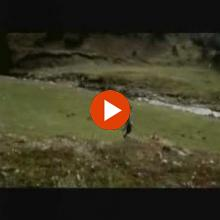 Νίκος Βέρτης - Γύρισες αλλά | Nikos Vertis - Gyrises alla - Official Video Clip
